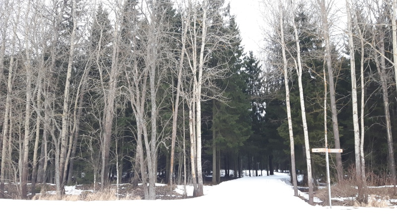 Osa Paloheinän laduista vaikutti olevan vielä ihan hyvin hiihdettävässä kunnossa.