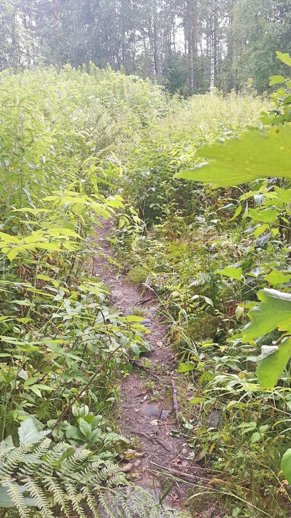Herajärven kierroksen maasto vaihteli reippaasti lähes umpeen kasvaneista heinikoista ja niityistä...