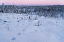Ahman jäljet lumessa