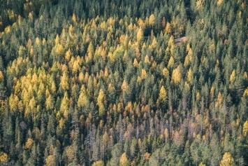 Konttainen, ruska ja metsämaisema